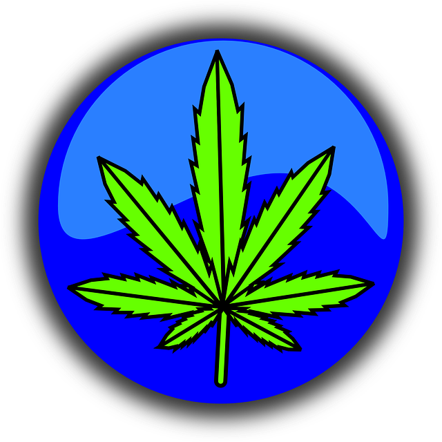 cannabis-490775_640.png