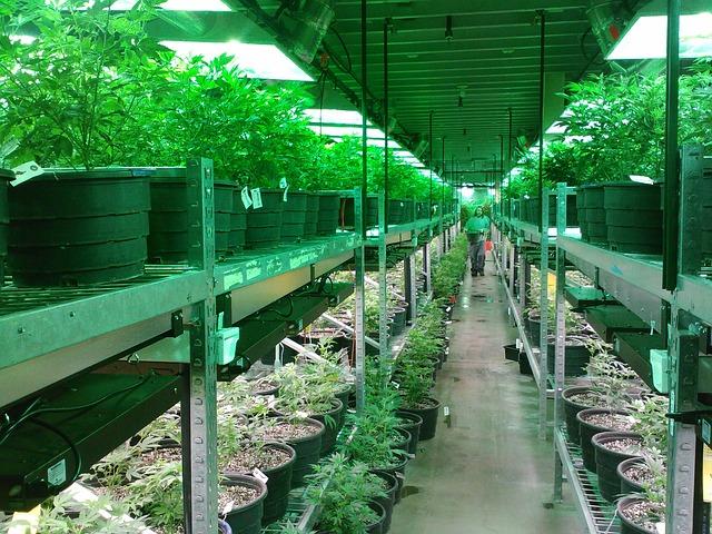 marijuana-269851_640.jpg