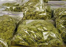 thirteen-bags-of-marijuana-found-in-taxi-cab