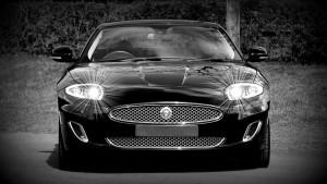 jaguar-1366978_960_720