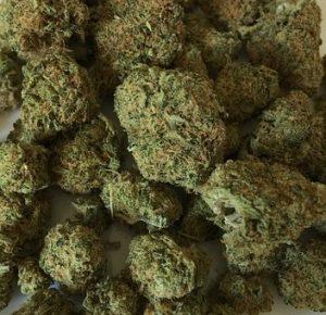 cannabis-1418339__340