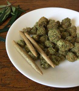 cannabis-1418332__480-261x300